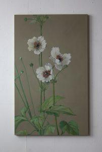 Bild anemone